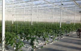 Hydroponic Production