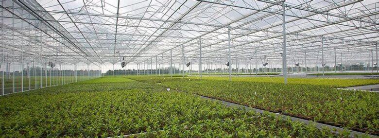 Greenhouse Inside - Agroturn