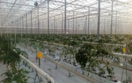 State of the arte Venlo greenhouse